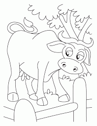 Buffalo In Fence Coloring Pages