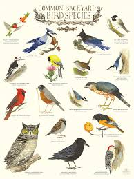 Best 25+ Bird Species Ideas On Pinterest | Pretty Birds, Colorful ... Introduced Birds Birds In Backyards Best 25 Bird Watching Ideas On Pinterest Pretty Backyard 510 Best Birds Of A Feather Images Blackwinged Stilt 2016 Results Aussie Count Rainbow Lorikeet Evolve Their Behavior Without Chaing Bodies The To Feed Or Not To Audubon Female Blackbird Front Yard And Landscaping Ideas Designs Country Garden Striped Honeyeater Inland E Australia My