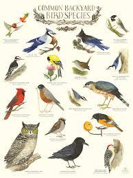 Common Backyard Bird Species