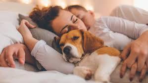 warum der hund im schlafzimmer schlummern sollte kurier at