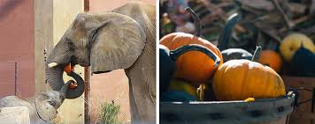 Pumpkin Patch Toledo Ohio by 22 Family Friendly Halloween Events In The Toledo Area