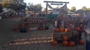 Pumpkin Patch Reno Nv by Must See Corn Mazes For Those Who Are In Las Vegas Axs