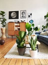 zimmerpflanzen set jungle ohne übertöpfe zimmerpflanze set jungle