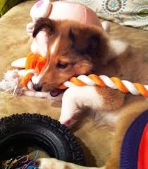 Puppies love to chew