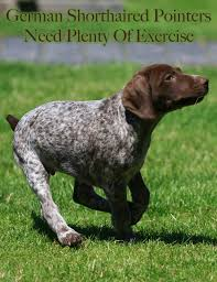 My Short Haired Dog Sheds A Lot by German Shorthaired Pointer The Happy Puppy Site