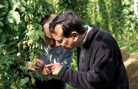 Samuel Adams Harvest Pumpkin Ale Uk by Brewstreams Craft Beer News Brewstreams