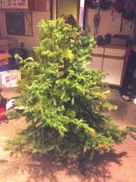 Christmas Tree Species Nz by Olaus Murie Christmas Tree Forrest Mccarthy