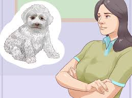 Non Shedding Hypoallergenic Dogs List by 3 Ways To Choose A Hypoallergenic Dog Wikihow