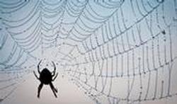 comment l araignée tisse sa toile vidéo passionsanté be