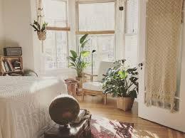 immergrüne zimmerpflanzen 3 trendpflanzen für deine wohnung