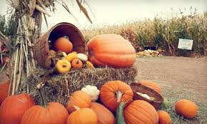 Pumpkin Patches Near Colorado Springs Co by 8 For Pumpkin Patch Admission U0026 Pumpkins For Two Diana U0027s
