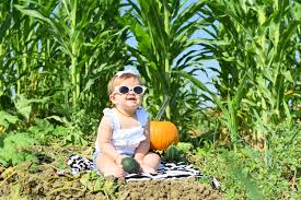 Best Pumpkin Patch Near Roseville Ca by Pumpkin Patches In The Greater Sacramento Area Interactive Map