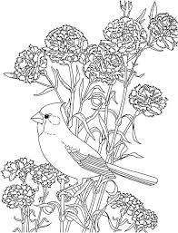Carnation Flower And Cardinal Bird Colouring Page Coloring