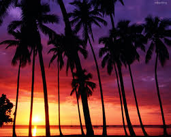 California Palm Trees Sunset Tumblr Wallpaper WSW2025188