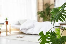 pflanzen im schlafzimmer das wird auch sie begeistern