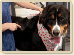 Dogs That Shed Less Hair by Shed Less Treatments Morris Animal Inn