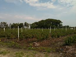 Miller Christmas Tree Farm Ct by Land Lease Exchange
