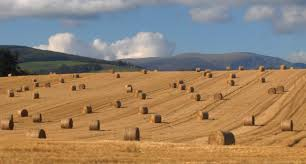 Hay Bales | Description Round Straw Bales In A Field.jpg ... Hay Day Android Apps On Google Play Best 25 Bale Pictures Ideas Pinterest Senior Pic Poses Affirmations For Sinus Problems Louise Law Of Attraction Farm Crew With Steam Tractor Hay Baler And Wagon Photographer Cute Bales Rustic Outdoor Parties Ludacris Whats Your Fantasy Lyrics Genius Barn Party Decorations