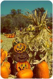 Pumpkin Patch Reno by 15 Pumpkin Patch Reno Nv 28 4684 Mia Cir San Jose 4630 Mia