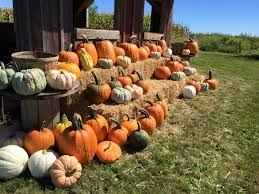 Pumpkin Patch Daycare Ct by Don U0027t Miss These 10 Great Pumpkin Patches In Iowa This Fall