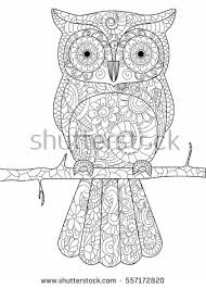 Owl On A Branch Coloring Book For Adults Raster Illustration Anti Stress