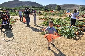 Pumpkin Patch Animal Farm In Moorpark California underwood family farms moorpark ca u2013 the davids