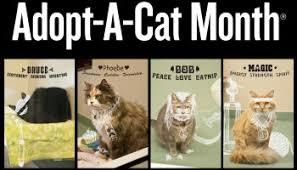 adopt a cat it s june it s national adopt a cat month cat opedia