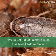 How To Get Rid Of Palmetto Bugs In 4 Pesticide-Free Steps (Dec, 2017) How To Keep Mosquitoes Away Geting Rid Of Five Tips For Getting Bugs And Pests On Your Patio Youtube To Get Chiggers Skin Body Yard Symptoms Fast Crawly Catures In My Backyard Alberta Home Gardening 25 Unique Rid Spiders Ideas Pinterest Kill Off Bug Control I Repellent Spiders Spider Spray Sprays Cutter 16 Oz Outdoor Foggerhg957044 The Of Time Tested Bob Vila Pictures With Japanese Beetles Garden Best Indoor Mosquito Killers Insect Cop
