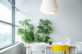 pflanzen im schlafzimmer können sie den schlaf fördern