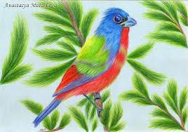 Color Drawing Pictures A Bird With Colored Pencils Using Turkey Coloring Pages