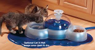 water for cats cat water water for cats drinkwell 360