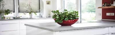 pflanzen für die küche und kräuter für die fensterbank vivanno