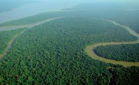 Earth Floor Biomes Desert by Tropical Rainforest Wikipedia