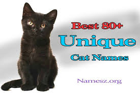cat names best 80 unique cat names collection namesz