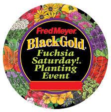black gold april 12th the 24th annual fred meyer fuchsia saturday
