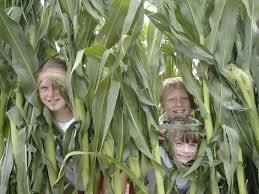 Atlanta Pumpkin Patch Corn Maze by Amazing Corn Mazes Near Atlanta Ga