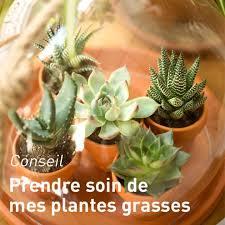 entretien plante grasse d interieur cactée et plante grasse plante d intérieure facile d entretien