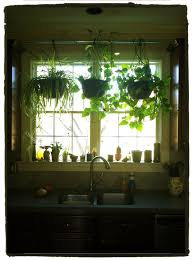 Floor To Ceiling Tension Pole Plant Hangers by Hang Plants In Your Kitchen Window Without Putting Any Holes In