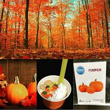 Pumpkin Patch Corvallis Oregon by Wacky Yo Frozen Yogurt Home Facebook