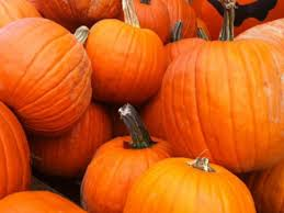 Pumpkin Picking Riverhead by 21 Places To Pick Pumpkins On Long Island Before They U0027re Gone