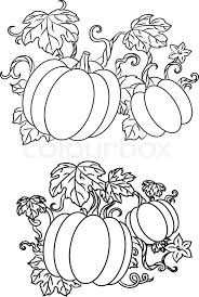 Black and white line drawings of pumpkins growing on trailing vines with leaves for halloween design vector illustration isolated on white Stock Vector