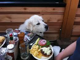 Tin Shed Highland Il by 10 Restaurants U0026 Coffee Shops With U201csecret U201d Menu Items For Dogs