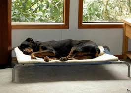 Petco Dog Beds by Dog Beds At Marshalls How To Choose Dog Beds U2013 Vaneeesa All Bed