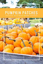 Pumpkin Patch Cal Poly Pomona by The Best Pumpkin Patches In The Inland Empire 2016 Lisa Dinoto Group