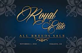 Royal Elite All Breeds Sale 2018 By Today's Publishing Inc. - Issuu Ramrod 2014 Youtube Kristin Thornton Hr Generalist Ramrod Trucking Inc Linkedin Camron Feliciano Cstruction Ltd Opening Hours 1 Tree Rd Brooks Ab The Ride Board Grateful Dead Guide To Dodge Ram Project By Truckin Magazine 112009 Boom Bust Gordon Young Medium 2017 Cates Farms Star Search Sale Catalog Ranch House Designs Issuu Pace Hshot Service Home Facebook Austin Forrest Rating Stone Company