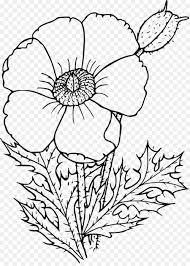 California Poppy Drawing Wildflower