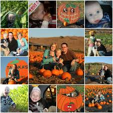 Tanaka Pumpkin Patch Irvine by Our Daily Journeys Irvine Spectrum And Tanaka Farms