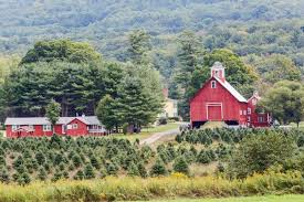 Christmas Tree Farm Farmhouse In Vermont For Sale Beautiful Trees