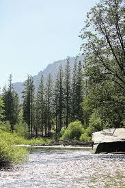 Lamp Liter Inn Motel Visalia by Best 25 Sequoia National Park Hotels Ideas On Pinterest Sequoia