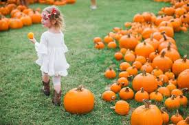 Sand Springs Pumpkin Patch by Where To Find Pumpkin Patches Around Austin